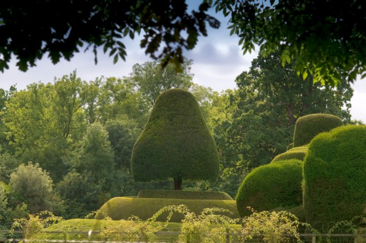Large topiary tree in the shape of a bell surrounded by natural forest
