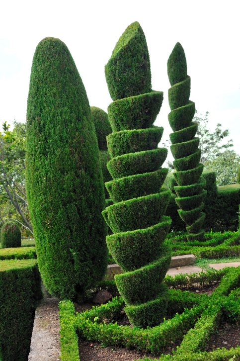 Stunning photo of tall spiral topiary trees bordered with low hedge