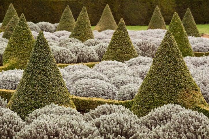 Topiary garden of cones and flower balls