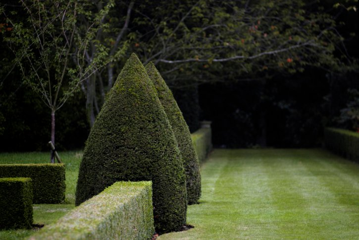 Long hedge with two topiary cones framed as a gate