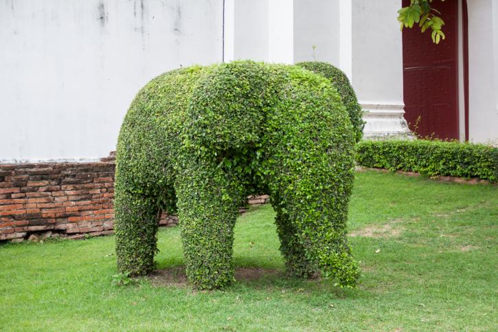 Topiary baby elephant