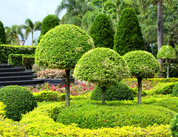 Topiary trees with half-balls among garden