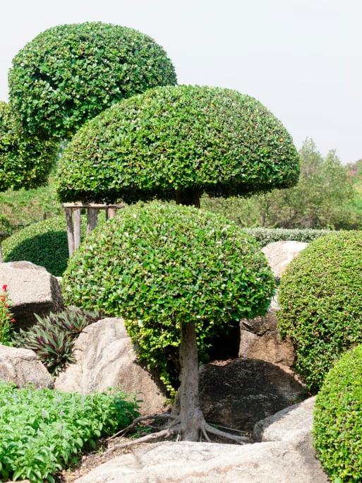 Series of three mushroom-shaped topiary trees in rock garden