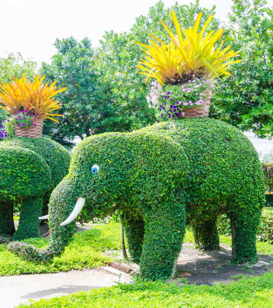 Tree shaped into elephant with tusks and eyes